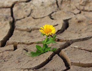 Extrem-Sommer 2018 und Klimawandel